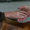 Handschlagqualität